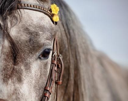 il Cavallo, un amico per la vita