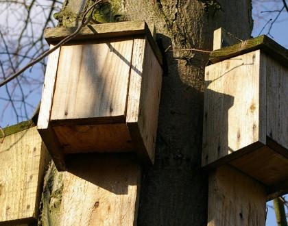 Un tetto per i pipistrelli