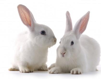 L'Amore per gli animali passa anche dagli acquisti